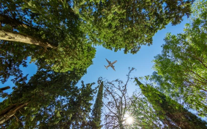 How much is a flight's carbon emission